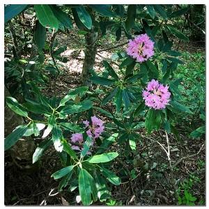 四国山岳植物園「岳人の森」