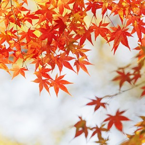 紅葉を見に行こうよう。